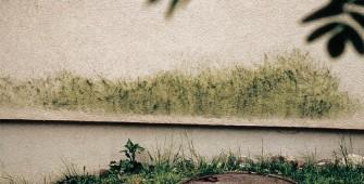 fachada-algas-fungos